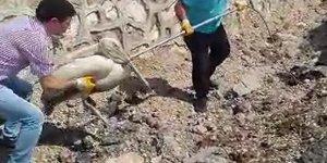 Yaralı pelikana yardım eli