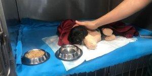 Yavru köpeği veterinere götüren hayvansever konuştu