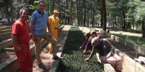 Ormancılar işbaşı yaptı