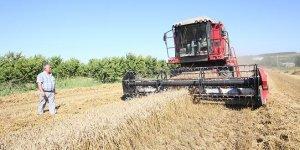 Yağmurun ardından buğday hasadına devam