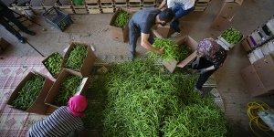 Yenişehir biberi Avrupa sofralarını süslüyor