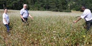 Orhaneli'nde karabuğday ekiminde artış