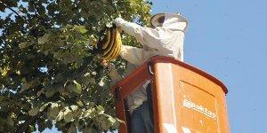 Ağaca yuva yapan arılar mahalleliye zor anlar yaşattı