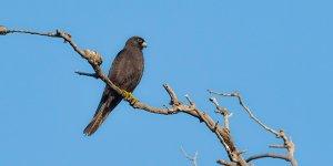 Karacabey Longozu'nda 270.tür...