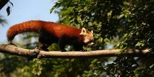 Bursa Hayvanat Bahçesi'nin yeni misafirleri