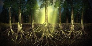 Ağaçlar birbiriyle iletişim kurar mı?