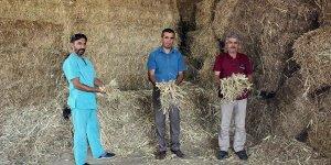 Yenişehirli çiftçiye mısır samanı önerisi