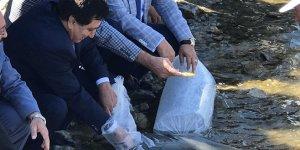 İznik Gölü'ne 500 bin yavru sazan bırakıldı