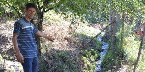 Mahallenin kanalizasyonu ağaçları kuruttu iddiası