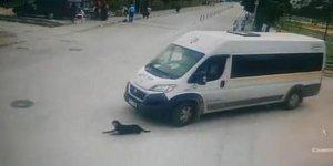 Köpeği ezen servis şoförüne bir şok daha!