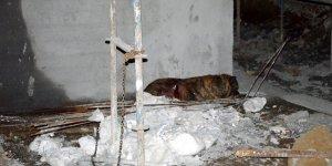 Kadını ve köpeğini kurtarmak isteyen mahalleli saldırgan köpeği bıçakladı
