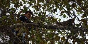 Gemlik'te ağaçta mahsur kalan kedi kurtarıldı