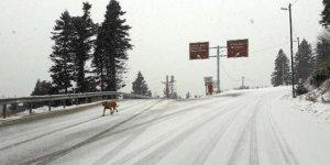 Uludağ'da kar kalınlığı 10 santimetreye yaklaştı