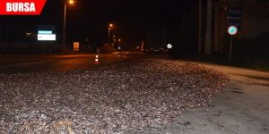 15 ton hamsi yola döküldü