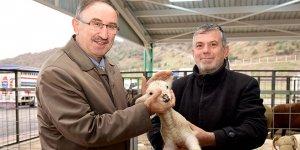 Hayvancılık sektörünün yüzü gülüyor