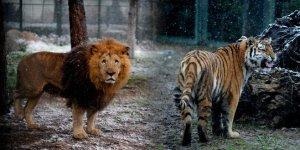Bursa Hayvanat Bahçesi'nden güzel görüntüler