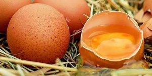 Yumurta fiyatları yüzde 50 düştü