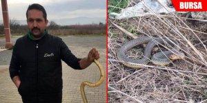 Yılanı eliyle yakaladı
