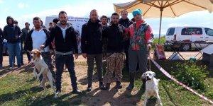 Yenişehir'de av köpekleri yarıştı