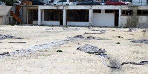 Halı sahadan boşalan alana tinerciler yerleşti