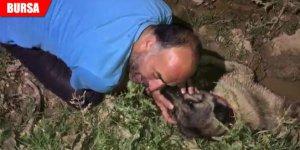Köpeğinin başında gözyaşı döktü