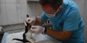 Sadece kedilere hizmet verilen tedavi ünitesi