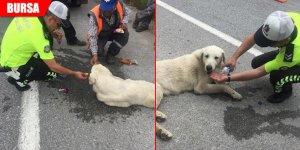Köpeğe polis şefkati