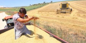 Yağmur yağışının sona ermesiyle buğday hasadı yeniden başladı