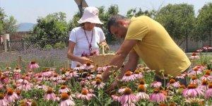 Bursa'da 'ekinezya' hasadı