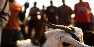 Tecavüz ettiği keçi ile evlendirildi