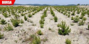 Kullanılmayan maden sahalarına 1 milyon fidan