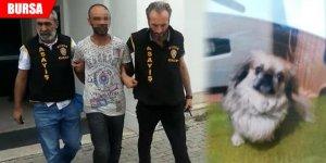 Köpek hırsızlarından biri yakalandı