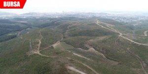 170 hektar alan yeniden yeşerdi