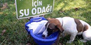 Sokak hayvanlarına can suyu