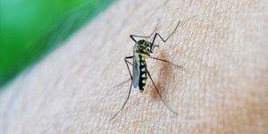 'Sivrisinekler erkekleri daha çok ısırıyor'