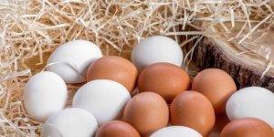 Günde iki yumurta yiyince vücudumuzda oluşan 9 efsane değişim