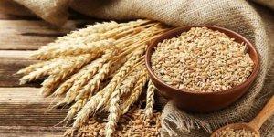 Buğdayda hedef 21,5 milyon ton üretim
