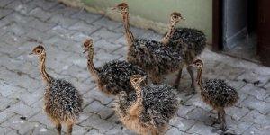 Bursa Hayvanat Bahçesi'ne 6 yeni üye