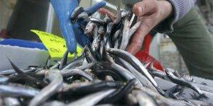 Karadeniz'de bolluk fiyatları düşürdü