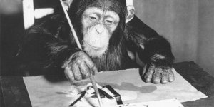 Şempanze Congo'nun 55 resmi satılacak