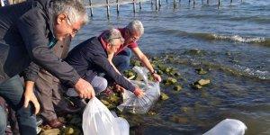 İznik gölüne 6 bin yayın yavrusu bırakıldı