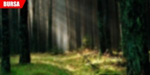 Ormanda feci olay