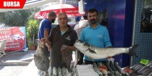 Mudanyalı balıkçının ağlarına takıldı! Görünce şaşkına döndü