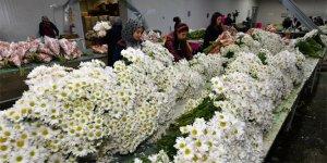 Kesme çiçekte hedef 110 milyon dolar