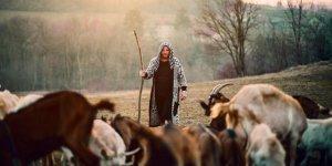 İŞKUR'dan çobanlık akademisi