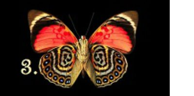 kelebek-3.jpg