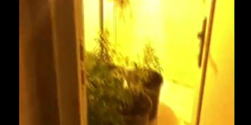 Apartman dairesini uyuşturucu serasına çevirmişler