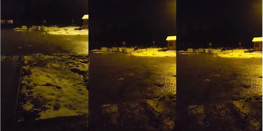 Çöp konteynerlerini karıştıran ayıyı köpekler kovaladı