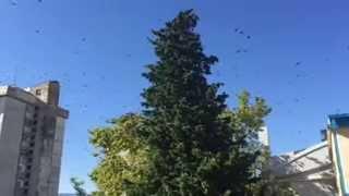 Ağır çekimde kuşların ağaçtan ayrılışı