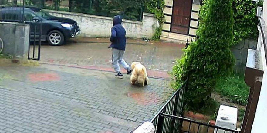 Köpek hırsızlığı kamerada